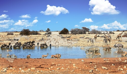 Namibian Wildlife Waterhole in Etosha National Park - image by Paula French/shutterstock.com