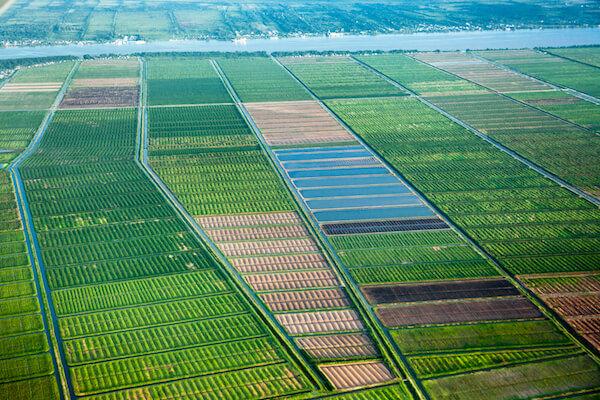 Fields near Georgetown Guyana - image by Victor 1153/shutterstock