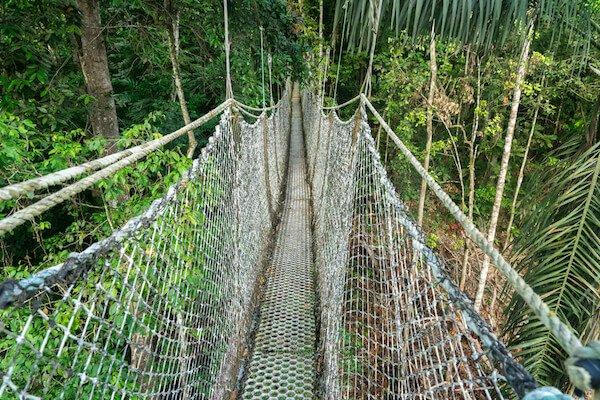 Iwokrama Canopy walk in Guyana