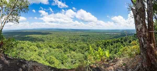 Views over the Guyana rainforest from Turtle Mountain