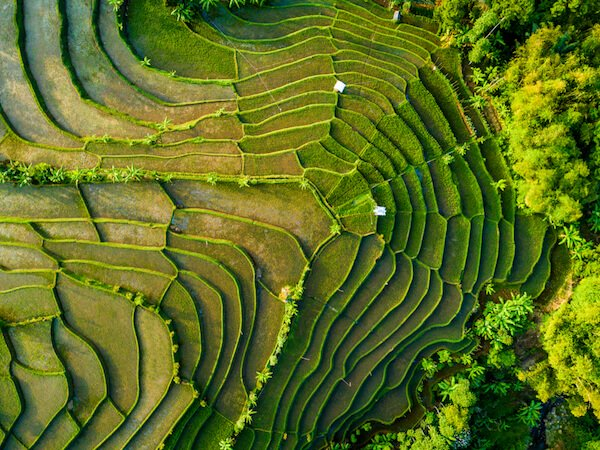 Rice fields in Indonesia - aerial view of landscape
