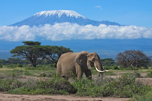 Mount Kilimanjaro - highest mountain in Africa