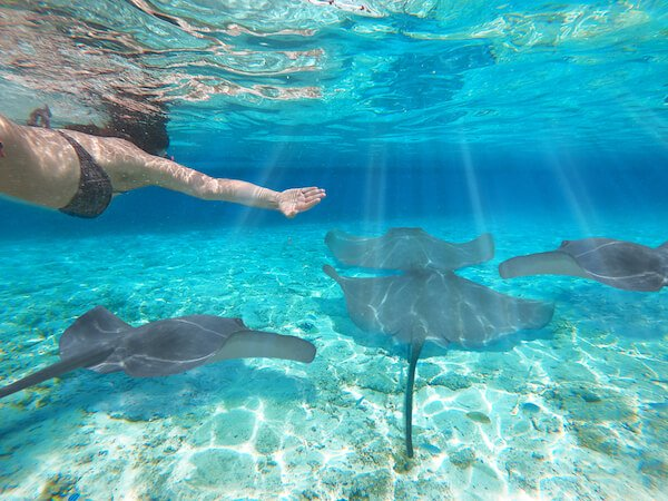 Mantrarays encounter while snorkelling in the Bahamas