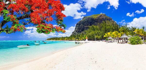 White sandy beach in Le Morne Mauritius with flame tree