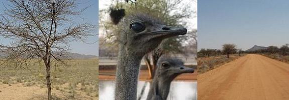 Namibia desert and ostriches