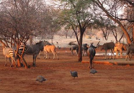 Namibian wildlife around a waterhole in Omaruru