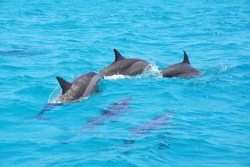 Pacific ocean animals for kids