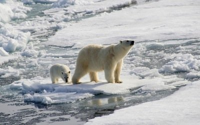 Polar bear and cub by Christopher Wood