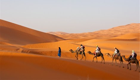 Camel Trek through Sahara