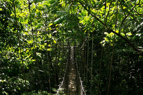 Samoa Canopy Walk by Johnny Giese/Shutterstock.com