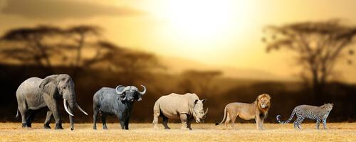 South Africa Animals   Wildlife   Big Five   Animals in ...
