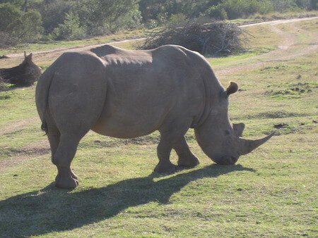 South Africa Animals   Wildlife   Big Five   Animals in