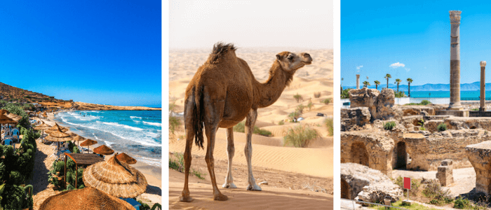 Tunisia Facts: Hammamet, Dromedary, Carthage